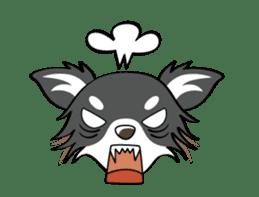 Long coat Chihuahua sticker #421636