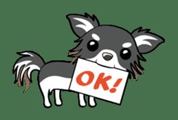 Long coat Chihuahua sticker #421641