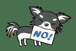 Long coat Chihuahua sticker #421642