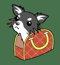 Long coat Chihuahua sticker #421645