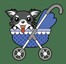 Long coat Chihuahua sticker #421646