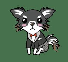 Long coat Chihuahua sticker #421648
