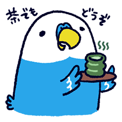 Parakeet INCOCO