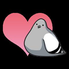 LOVE pigeons