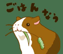 Guinea pig sticker #453866