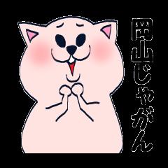 Cute cat speak Okayama Ben