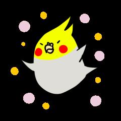 GOMA of a Cockatiel