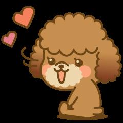 Kawaii Dog - Toy Poodle