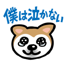 Shiba Inu (native japanese dog) sticker #492276