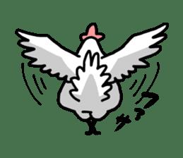 Husband of chicken sticker #498913