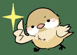 Java sparrow brother sticker #533036