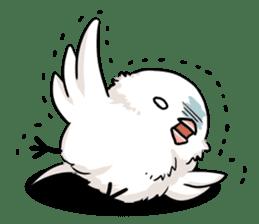 Java sparrow brother sticker #533038