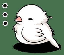 Java sparrow brother sticker #533043