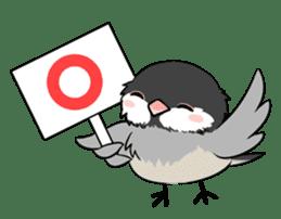 Java sparrow brother sticker #533046