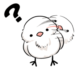 Java sparrow brother sticker #533048