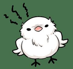 Java sparrow brother sticker #533051