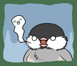 Java sparrow brother sticker #533052