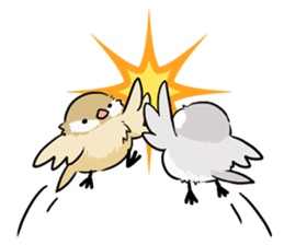 Java sparrow brother sticker #533054