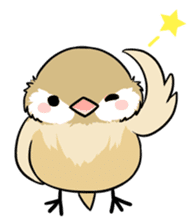 Java sparrow brother sticker #533055