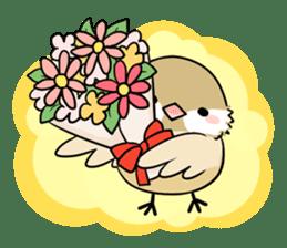 Java sparrow brother sticker #533062