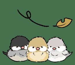 Java sparrow brother sticker #533065