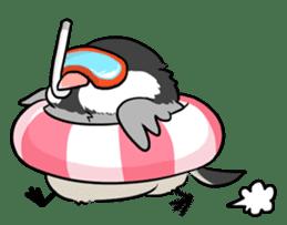Java sparrow brother sticker #533067