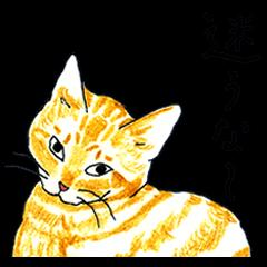 brown tabby cat koto-chan part2
