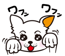 Cute Chihuahua! sticker #554205