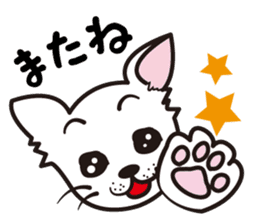 Cute Chihuahua! sticker #554229