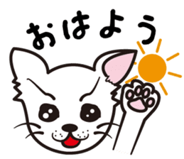 Cute Chihuahua! sticker #554231