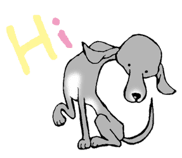 The Italian Greyhound festival! sticker #557554