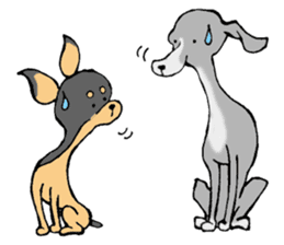 The Italian Greyhound festival! sticker #557560