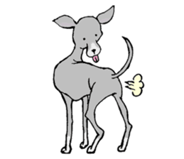 The Italian Greyhound festival! sticker #557580