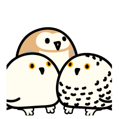 Snowy Owl and Barn Owl