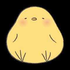 round chick