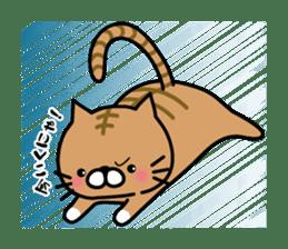 Striped cat & white cat sticker #590577
