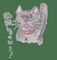 Pencil handwriting cat sticker #599034
