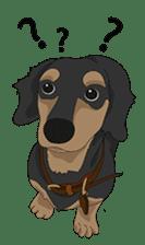 Cute Dachshund Ryu!! sticker #606324