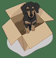 Cute Dachshund Ryu!! sticker #606325