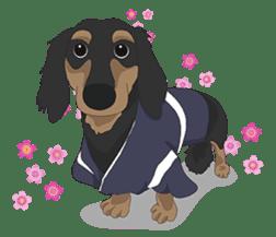 Cute Dachshund Ryu!! sticker #606327