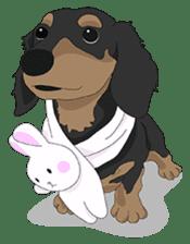 Cute Dachshund Ryu!! sticker #606331