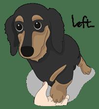 Cute Dachshund Ryu!! sticker #606351