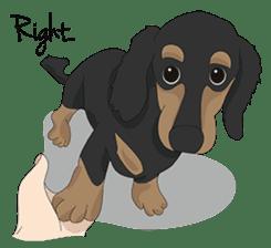Cute Dachshund Ryu!! sticker #606352