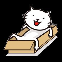 Very white cat