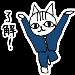 Cheerleaders cat