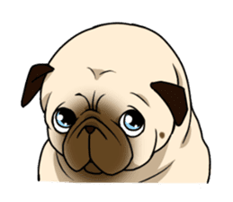 PUGchan sticker #622747