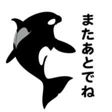 ORCAS ALL OVER!! sticker #622969