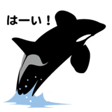 ORCAS ALL OVER!! sticker #622973