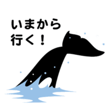 ORCAS ALL OVER!! sticker #622975