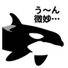 ORCAS ALL OVER!! sticker #622980